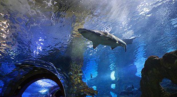 Quarto + Entradas no Aquarium